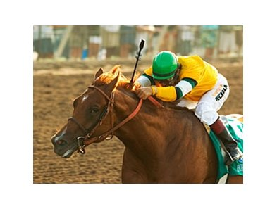 Horse Greeley has been retired and will enter stud next year at Claiborne Farm.