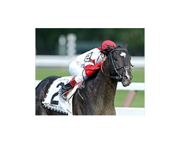 Whitney winner Roses in May will race once before Dodge Classic.