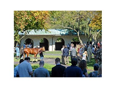 The Keeneland paddock was a popular place this Fall.