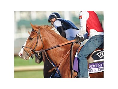 Shackleford at Churchill Downs.