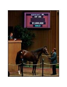 $1.6 million filly, Storm Cat - Welcome Surprise by Seeking the Gold sold by Lane's End on Sept. 11.