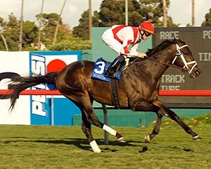 Grade I-Winning Stallion Sunriver Dead