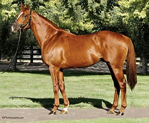 First Stakes Winner for Magali Sire