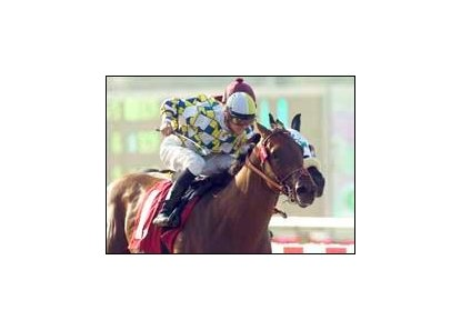 "Best Pal winner Salute the Sarge faces Del Mar dozen on the fifth.<br><a target=""blank"" href=""http://www.bloodhorse.com/horse-racing/photo-store?ref=http%3A%2F%2Fpictopia.com%2Fperl%2Fgal%3Fprovider_id%3D368%26ptp_photo_id%3D1990378%26ref%3Dstory"">Order This Photo</a>"