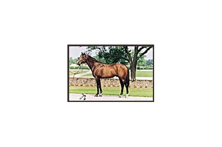 Honor Grades, deceased sire of 18 stakes winners.