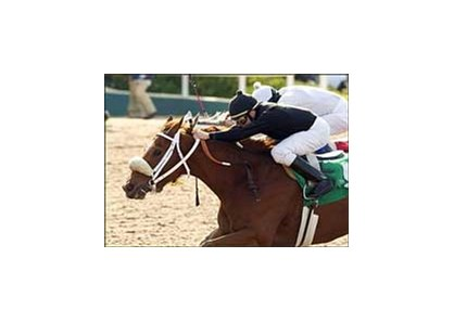 "Ashley's Kitty, front, holds off a pressing Silver Swallow, back, to win the Railbird Stakes, Sunday at Hollywood Park.<br><a target=""blank"" href=""http://www.bloodhorse.com/horse-racing/photo-store?ref=http%3A%2F%2Fpictopia.com%2Fperl%2Fgal%3Fprovider_id%3D368%26ptp_photo_id%3D1189559%26ref%3Dstory"">Order This Photo</a>"