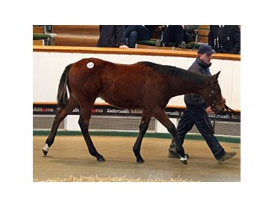 Lot 1094, colt, Teofilo - Stairway To Glory by Kalaniski brought 220,000 guineas as the top lot on the final day.