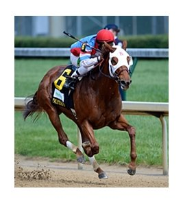 "Groupie Doll<br><a target=""blank"" href=""http://photos.bloodhorse.com/AtTheRaces-1/at-the-races-2012/22274956_jFd5jM#!i=1830325064&k=LTstFfm"">Order This Photo</a>"