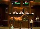 Colt; Yes It's True - Debit Or Credit by Cat Thief brought $425,000 at the Ocala Breeders' Sales Co. Feburary select sale of 2-year-olds in training.