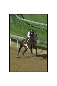 Thunder Blitz, one of four top Derby contenders working at Churchill Downs on Sunday.