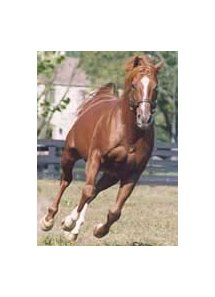 Gilded Time (1998 photo), early leader on 2001 general sire list.
