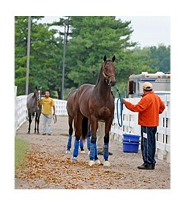 Yearlings arrive for the 2011 Keeneland September yearling sale.
