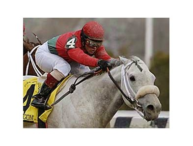 Silver Wagon will enter stud in 2008.