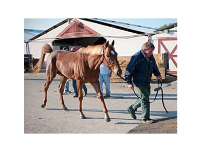 Owner Butch Nemann loads his 4-year-old filly Legs Galore into the back of his trailer April 21 in anticiaption of the coming waters.