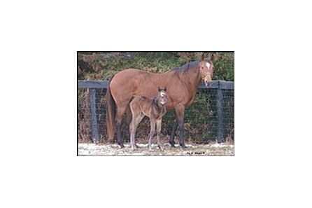 This filly was the first foal produced from the first crop of Empire Maker.