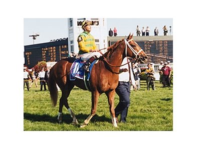 Charismatic after winning the Kentucky Derby.