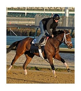"Malibu Prayer was one of 5 Breeders' Cup workers for Todd Pletcher at Churchill Downs on Oct 30.<br><a target=""blank"" href=""http://www.bloodhorse.com/horse-racing/photo-store?ref=http%3A%2F%2Fpictopia.com%2Fperl%2Fgal%3Fprovider_id%3D368%26ptp_photo_id%3D9256980%26ref%3Dstory"">Order This Photo</a>"