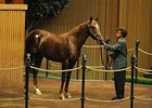 Hip 712, a colt by Mr. Greeley, brought $875,000 in the third session of the 2008 Keeneland September yearling sale.