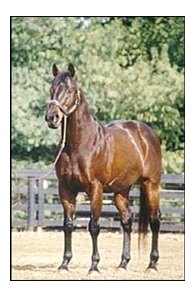 Deceased stallion Allen's Prospect.