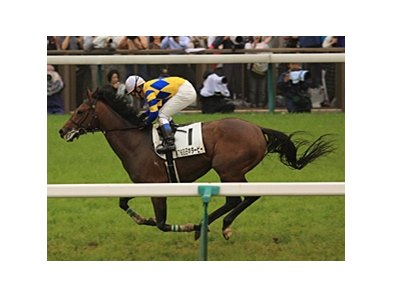 Logi Universe winning the Japan Derby.