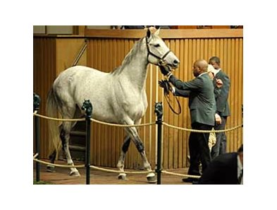 Island Fashion enters the sale ring at Keeneland Jan. 12.