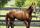 Congaree, to stud at Adena Springs in Kentucky.