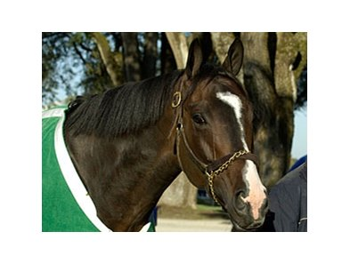 "Lava Man has been retired.<br><a target=""blank"" href=""http://www.bloodhorse.com/horse-racing/photo-store?ref=http%3A%2F%2Fpictopia.com%2Fperl%2Fgal%3Fprovider_id%3D368%26ptp_photo_id%3D601496%26ref%3Dstory"">Order This Photo</a>"