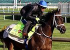 "Mubtaahij<br><a target=""blank"" href=""http://photos.bloodhorse.com/TripleCrown/2015-Triple-Crown/Kentucky-Derby-Workouts/i-MKLX3P4"">Order This Photo</a>"