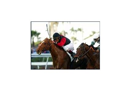 Honor In War, left, and jockey Shaun Bridgmohan hold off Hotstuffanthensome to win the Ft. Lauderdale Stakes at Gulfstream Park.