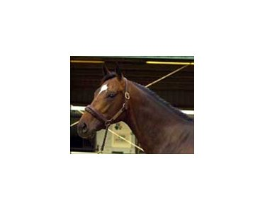 Deputy Commander colt tops opening session of OBSC 2-year-old sale.