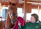Funny Cide is presented to his fans at the Kentucky Horse Park.