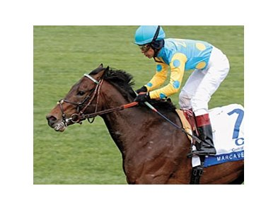 Marcavelly will enter stud at John Burness' Colebrook Farms Stallion Station near Uxbridge, Ontario, Canada.