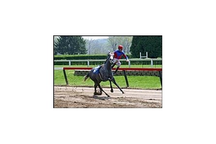 Jockey Dean Sarvis is unseated while riding Two Timin Cat in Saturday's second race at River Downs.