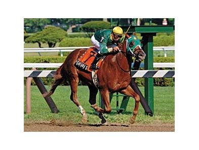 Santana Strings won the 2005 Amsterdam (gr. II) at Saratoga.
