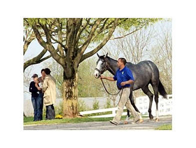 Keeneland April 2YOIT sale 2011.