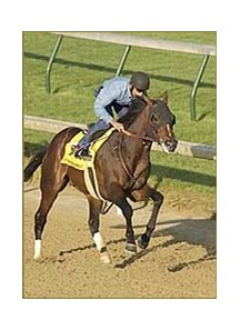 Atshwatimtalknbout, in Sunday breeze at Churchill Downs.