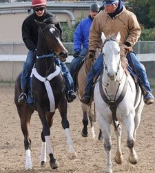 FG Creates Race to Lure Rachel Alexandra