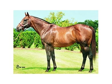 Dixieland Band, one of the original stallions at Lane's End, has been pensioned.