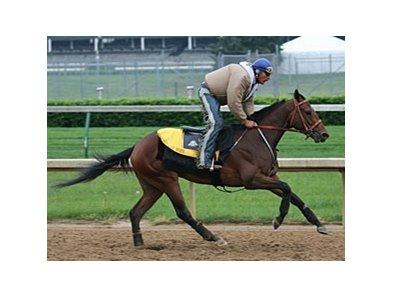 Mine That Bird on track at Churchill Downs on May 5.