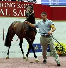 Danehill Colt Tops International Sale at HK$3 Million