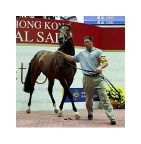 A 2YO bay colt by Danehill fetches the highest price at Hong Kong International Sale.