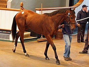 Five Six-Figure Yearlings at Tattersalls