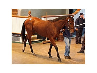 Lot 102 by Acclamation topped the Tattersalls December Yearling Sale.