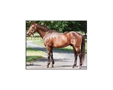 Leading broodmare sire Mr. Prospector.