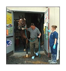 Dr. Dean Richardson leads Barbaro to the operating room where the colt's cast was changed Monday.