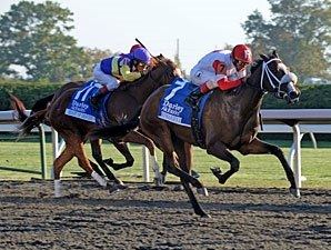 Stephanie's Kitten Rallies to Take Alcibiades