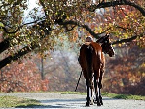 Keeneland's 'True Market' Comes to a Close