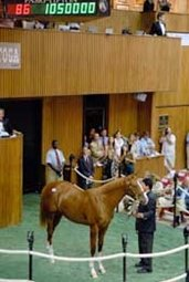 First Session of Saratoga Sale Generates Mixed Results