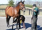 Victory Gallop is inspected prior to leaving for stud duty in Turkey.