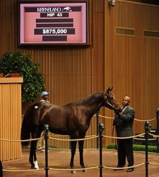 Coolmore Buys Bernardini Colt for $875,000